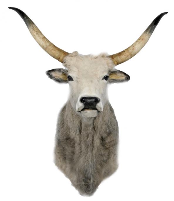 Tete De Vache Deco : accessoire d co t te de vache location accessoire d co design vachon d coration ~ Melissatoandfro.com Idées de Décoration